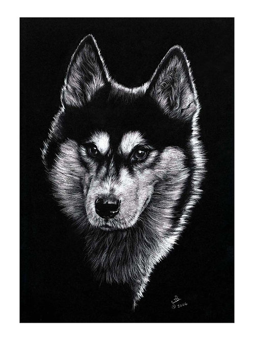 'ARCTIC CHILL' OPEN EDITION HUSKY PRINT