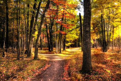 two paths diverged-sterken Photo.jpg