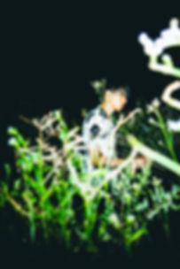 DSC08504.jpg