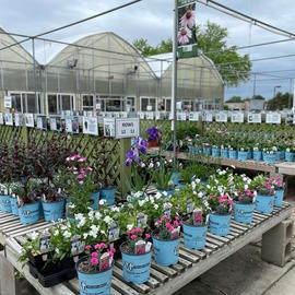 25% Off Perennials