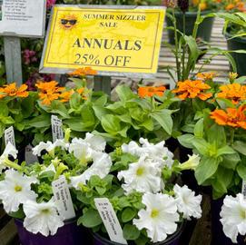 25% Off Annuals