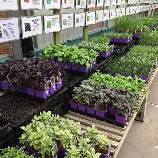 $2.69 Potted Herbs