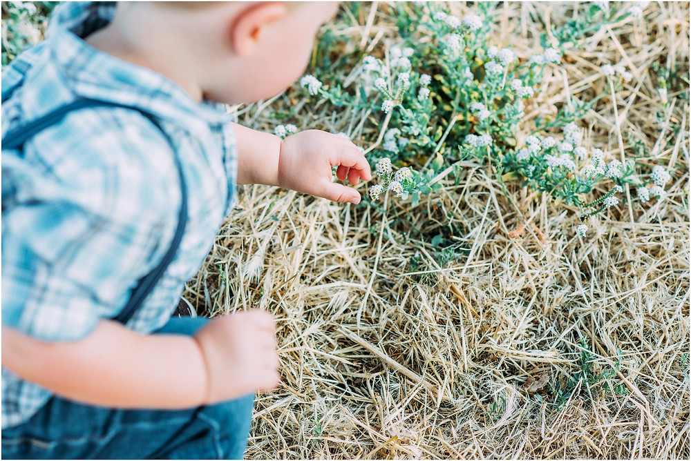 Little boy picking flowers in Bay Area for family photos