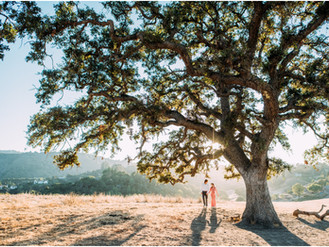 Jackie & Nick Sneak Peek - Los Altos Golden Hour