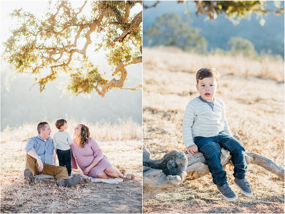 Family of sitting under oak tree in Bay Area for maternity session