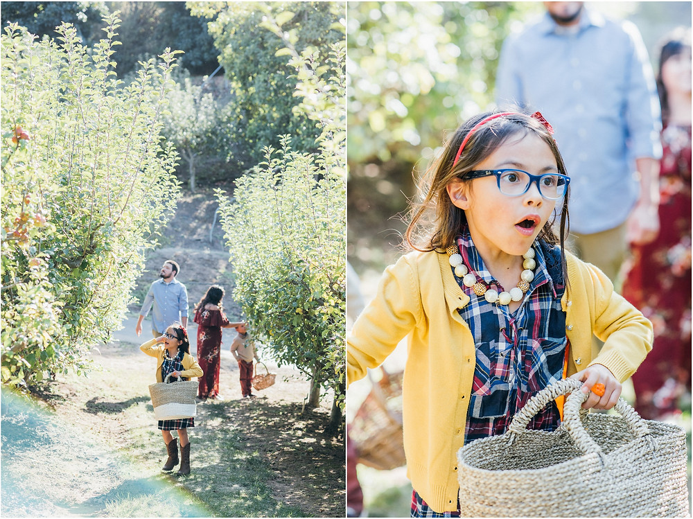 Family apple picking photos