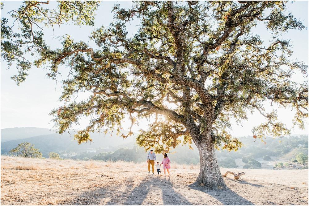 Family walking under oak tree in Los Altos Hills, Ca during golden hour