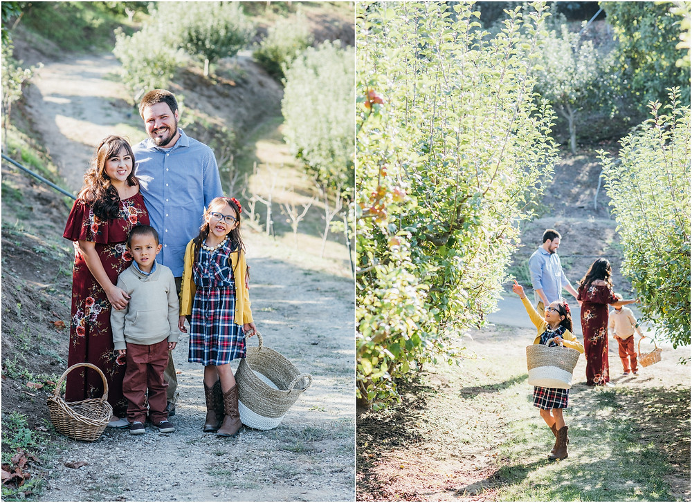 fall family session in an apple orchard in Bay Area