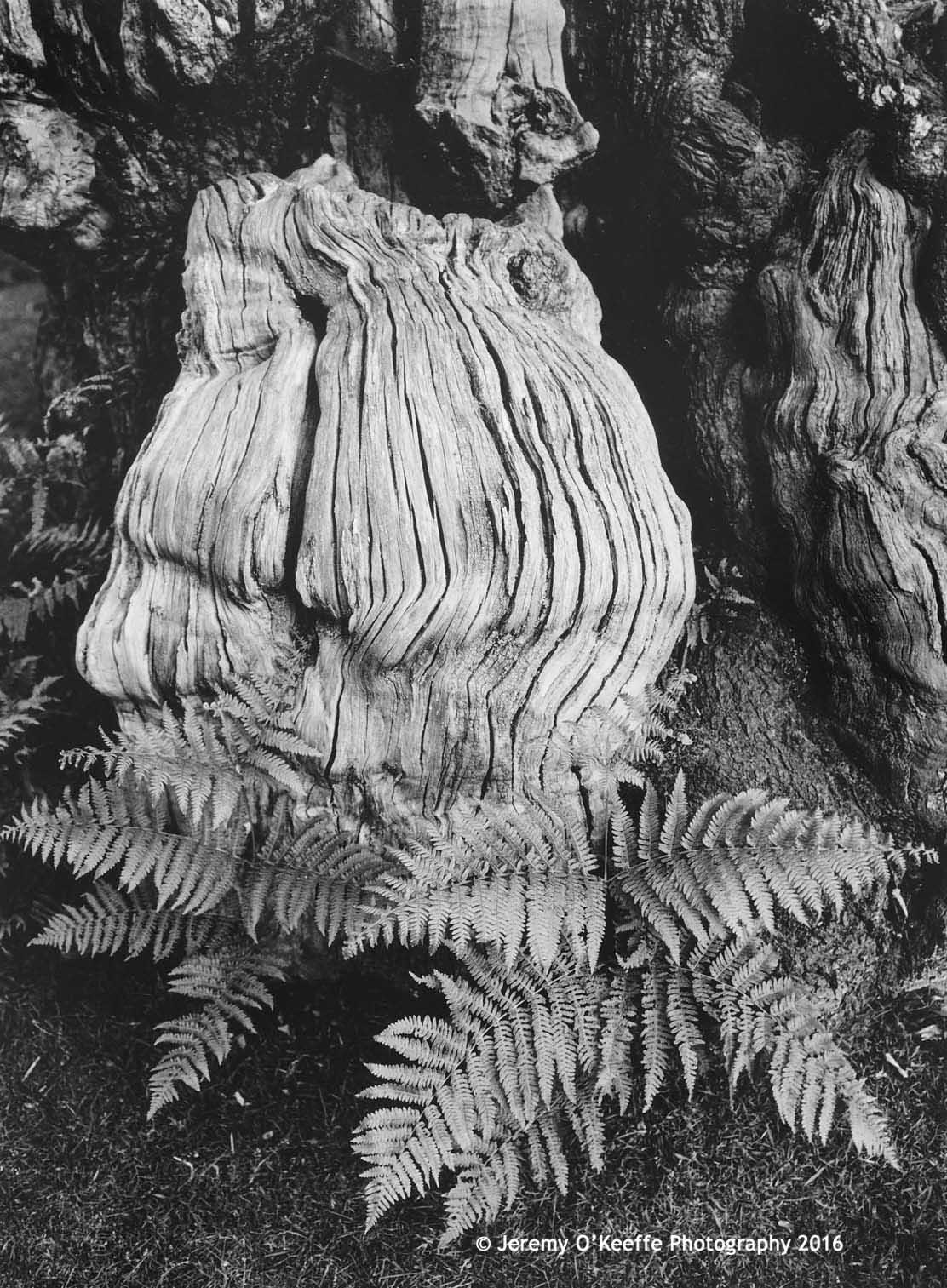 Fern & Tree