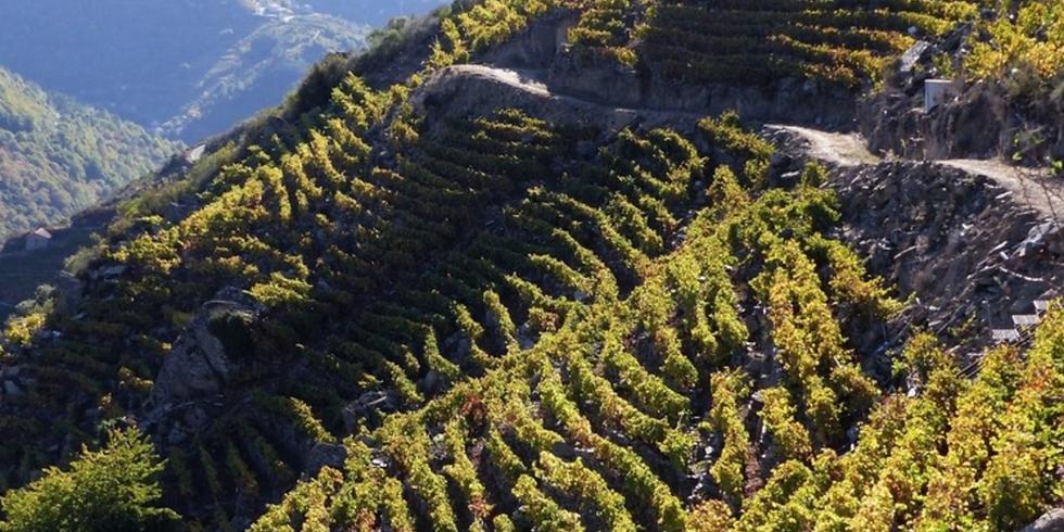 秋のワインテイスティング Early fall wine tasting