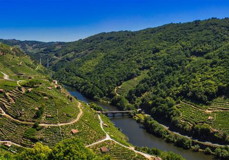 Galicia wine tasting