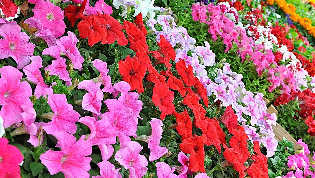 annual-flowers_edited.jpg