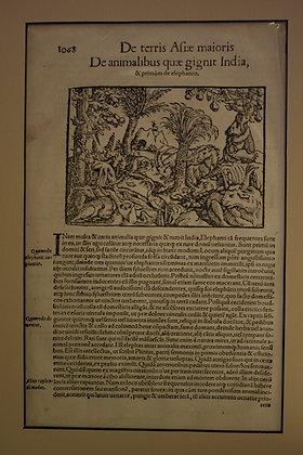 Menagerie in India, 1510