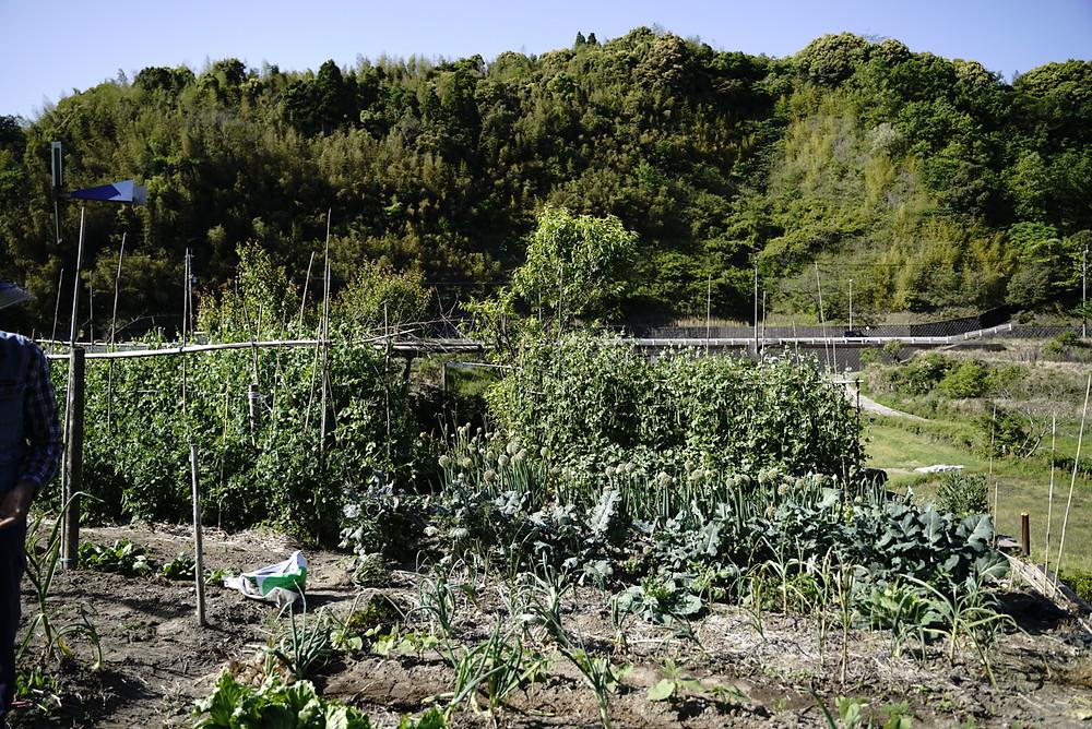 末吉さん宅の畑