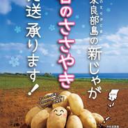 鹿児島県ブランド指定「春のささやき」