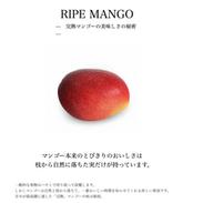 田中マンゴー園WEB