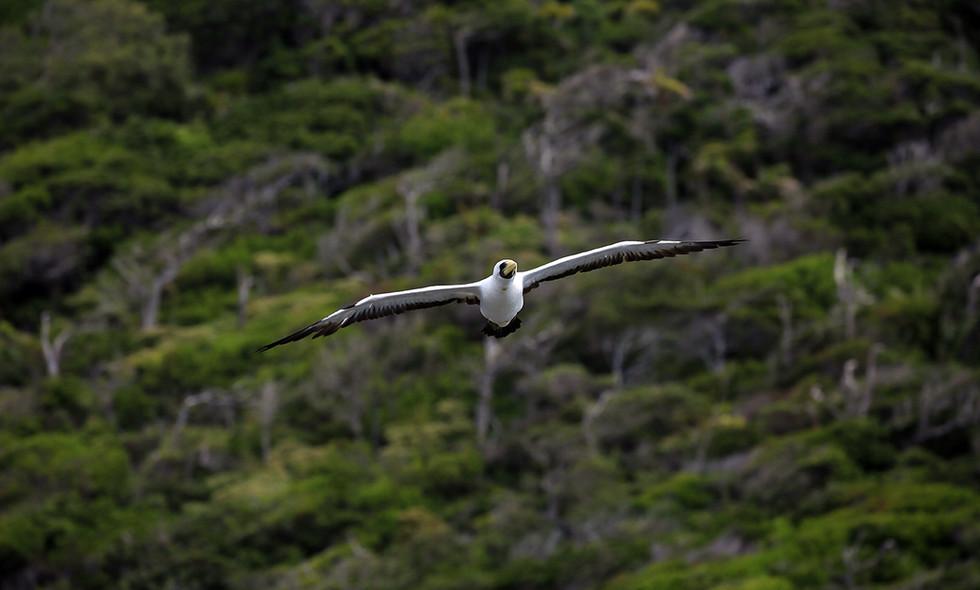 Lord Howe Island.Australia