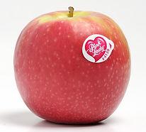 Apple - Pink Lady (ea)