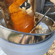 Harvesting honey for a local school in Treasure Island