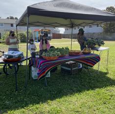 Weekly free harvest table at Treasure Island community garden