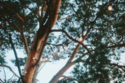 E_N-36
