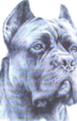 Hund HP_edited.jpg