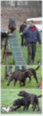 hundeschule-welpenspiel1.jpg