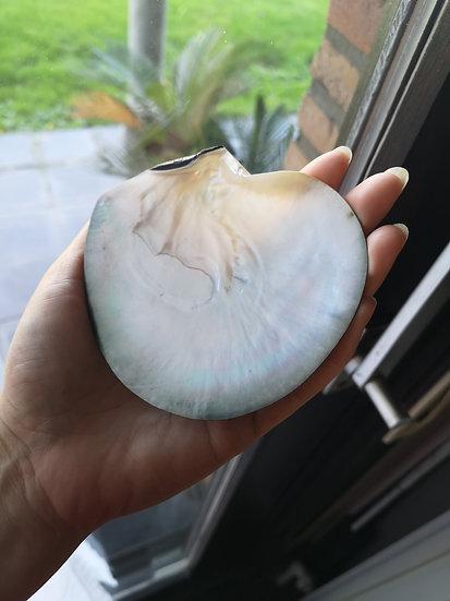 Porte-savon coquillage naturel nacré