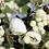 Thumbnail: Cocon de soie - exfoliant naturel