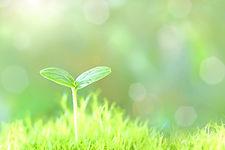 juku.green.jpg