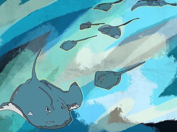Artwork of stingrays, underwater art, personalised prints, print, art, stingray, animal, water, ocean, sea, ocean art, Eva B Prints