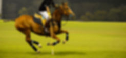 At Night Polo player and horse playing i