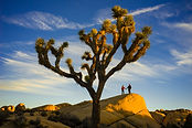 1360_Joshua_Tree_NP_Annick_Guy_191.jpg