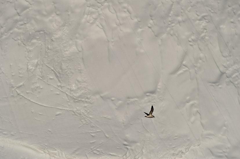 706_Ilulissat_Groenland_20-21.06.10_©Dom