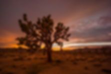 1260_Joshua_Tree_NP_186.jpg