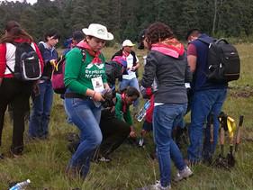 Reforesta Daimler cinco hectáreas del Nevado de Toluca en su Day of Caring