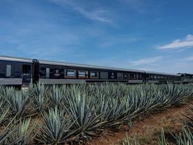 ESTILO | Ferromex relanza el nuevo recorrido del Tren Tequilero Herradura Express