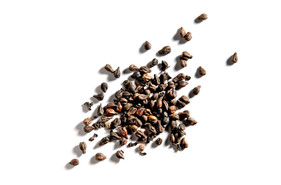 4455-grape-seeds.jpg