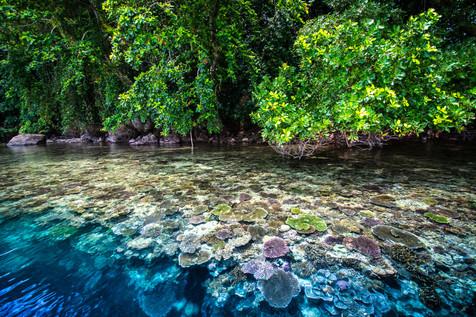 DoDo blue Forest 3.jpg