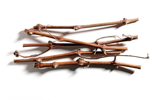 4460-Vine-stalks.jpg
