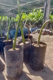 Mangroves Plantation 2.jpeg