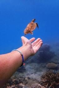 Dodo For Tenaka - hand and turtle under