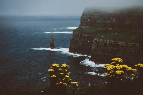 irland_roadtrip_cliffs_of_moher_blüten_l