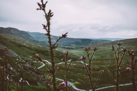 Irland_roadtrip_natur.jpg
