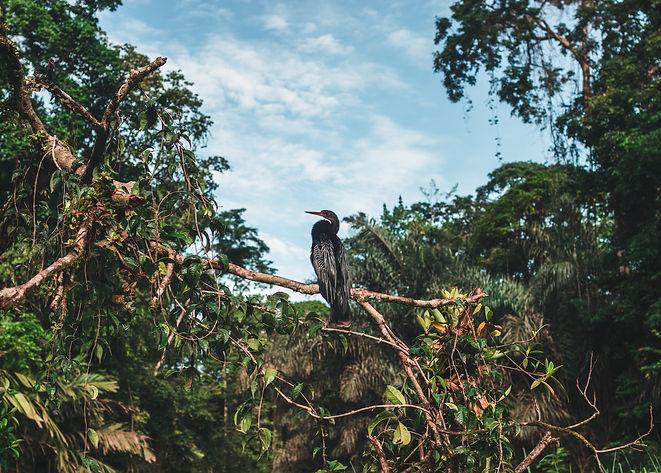 bird_tortuguero_JK.jpg