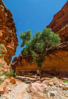 havasupai_havasu_falls__trail_grand_cany