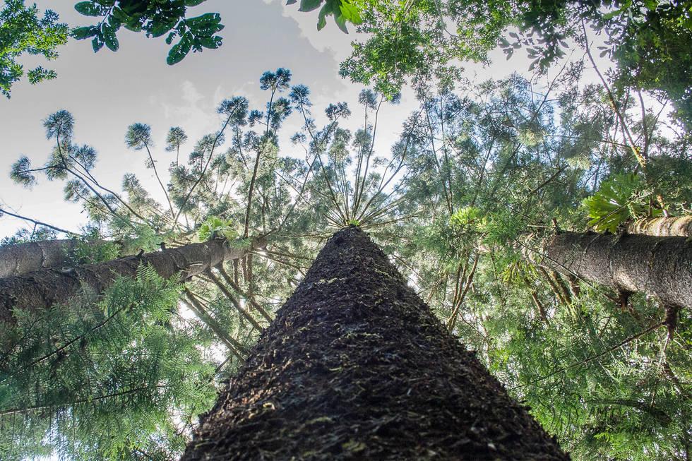 High Canopy