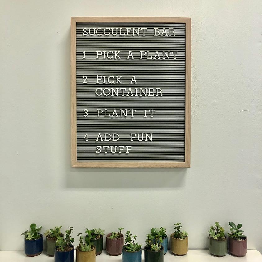Succulent Arrangement Bar || $8+