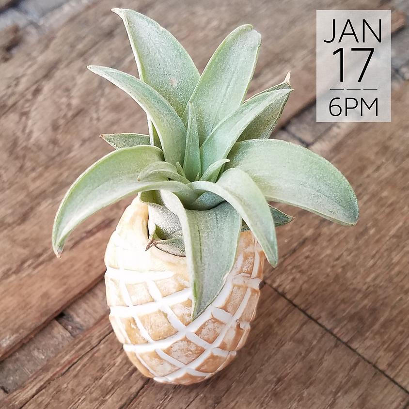 Air Plant Pineapple Workshop || $55