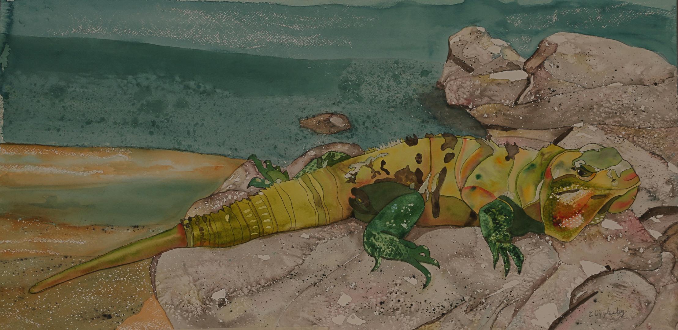 Playa del Carmen Iguana